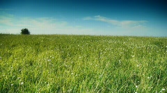 Grassy hill panning 3 Stock Footage