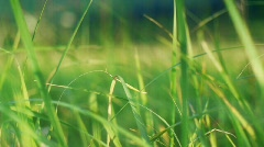 Grassy hills 3 Stock Footage