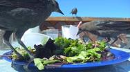 Stock Video Footage of Bird Salad 1