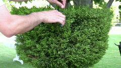 Man trimming  shrubs   Full HD 1080p Stock Footage