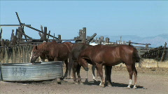 Horses at Water Trough Stock Footage
