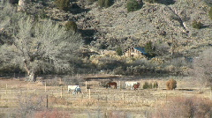 Horses by the Rio Grande-ws-zoom Stock Footage
