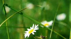 Wildflowers 1 Stock Footage