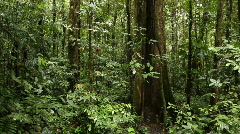 Large tree in tropical rainforest Stock Footage
