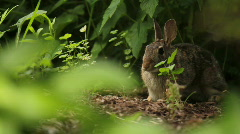 Rabbit in Garden - stock footage