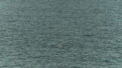 Seagulls beagle channel 5 Stock Footage