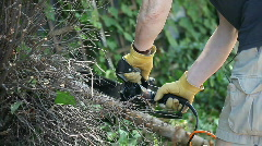 Man sawing a tree limb Stock Footage