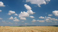 White clouds flying on blue sky over yellow oat field Footage