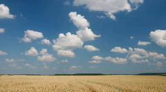 White clouds flying on blue sky over yellow oat field Stock Footage