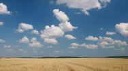 Stock Video Footage of White clouds flying on blue sky over yellow oat field