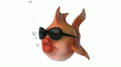 Fish with sunglasses - stock footage