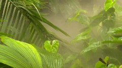 steamy jungle garden in conservatory - stock footage