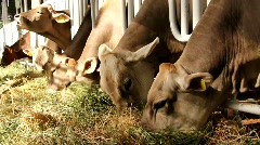 Livestock sector Stock Footage