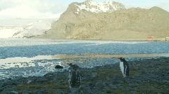 Penguins Livingston Island 7 Stock Footage