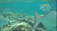 Stock Video Footage of fish swim by