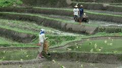 Karen Rice Field Workers Stock Footage