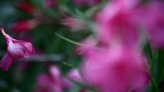 Violet Flowers Rack Focus 001 Stock Footage