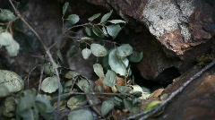Dead Leaf and Rocks 001 Stock Footage