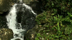 Rocky Forest Stream Stock Footage