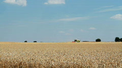Combine harvesting  wheat - stock footage
