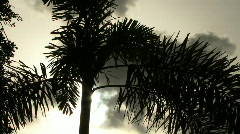 Palm Tree Silhouette with Sun  - stock footage