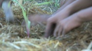 Stock Video Footage of Planting new plants