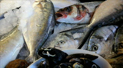 Saltwater fish in the cooler for sale Stock Footage
