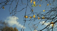 Yellow Leaves against Blue Sky in Windy Autumn Weather Stock Footage