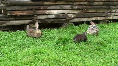 Rabbits making their siesta Stock Footage