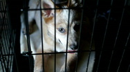 Puppy Dog in cage looking around Stock Footage