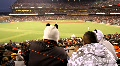 Baseball Fans HD Footage