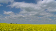 time-lapse, canola & clouds - stock footage