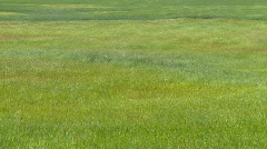 Agriculture, hay field, waving in the wind, #1 Stock Footage