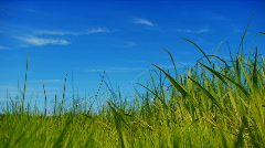 Nature background 1080p - stock footage