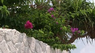 Stock Video Footage of Plant with flowers on wall