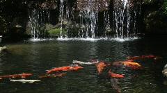 Fish pond - stock footage