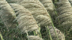 Windy golden bay, New-Zealand Stock Footage