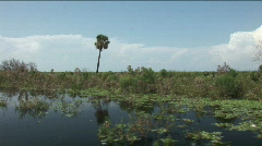 Palm Tree on Island - Lake Okeechobee Stock Footage