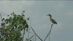 Florida Bird in Tree - Lake Okeechobee Stock Footage