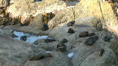 Seals on the rocks, New-Zealand Stock Footage