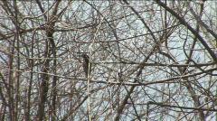 Florida Bird in Dead Tree - Lake Okeechobee Stock Footage