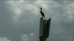 Duck on Pile Marker - Lake Okeechobee Stock Footage