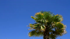 PalmTree & Blue Sky Stock Footage