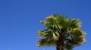 Stock Video Footage of PalmTree & Blue Sky