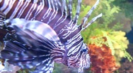 Stock Video Footage of Aquarian fish