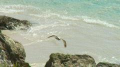 Eagle Soaring Over Ocean - Osprey - stock footage