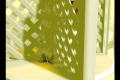 3506 Our Love Eternal Gazebo lattus wedding Butterflies Stock Footage