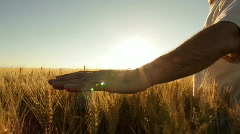 Farmer in wheatfield close Stock Footage