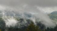 Redwood Forest Fog & Rain HSD 01 Stock Footage