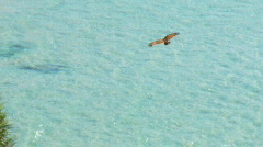 Eagle Soaring Over Ocean - Brahminy Kite, Bald Sea Hawk - stock footage